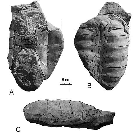 Fossils of the Edmonton Region image